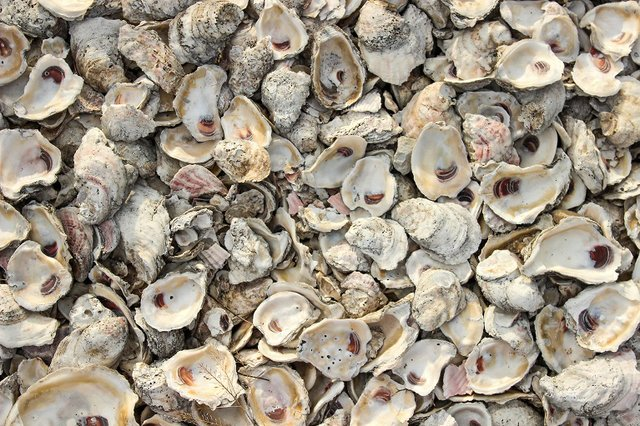 Alabama Oyster Shell Recycling Program
