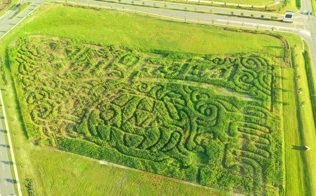 OWA Corn Maze