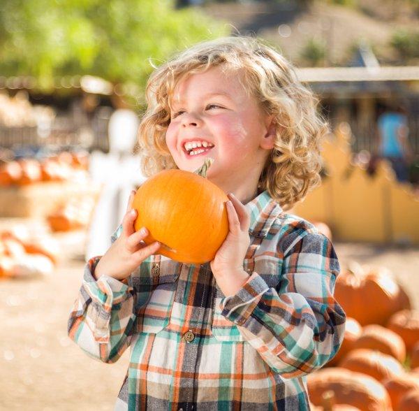Fall Festival Pumpkin Patch