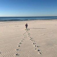 leave only footprints website.jpg