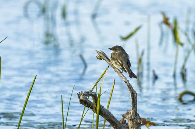 Alabama Coastal Birding Trail