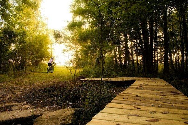 Foley - Graham Creek Nature Preserve
